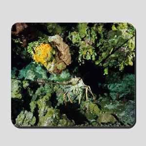 Caribbean spiny lobster Mousepad