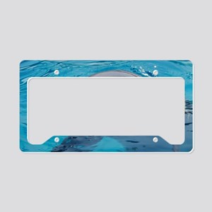 Bottlenose dolphin License Plate Holder