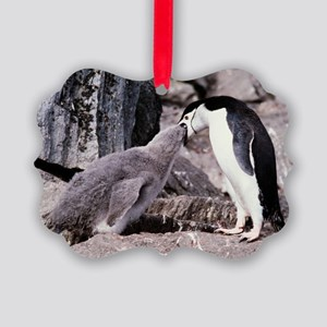 Chinstrap penguin feeding chick Picture Ornament