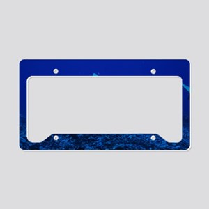 Bull shark License Plate Holder