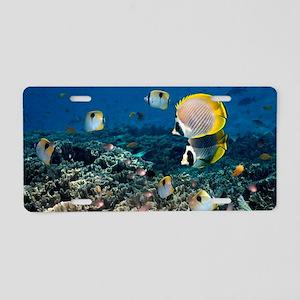 Butterflyfish Aluminum License Plate