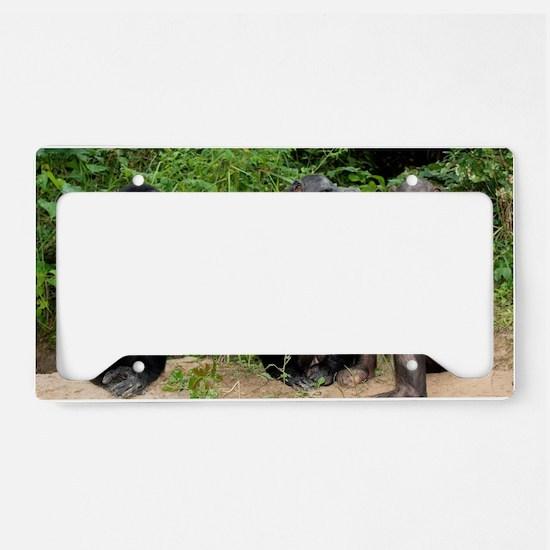 Bonobo apes License Plate Holder