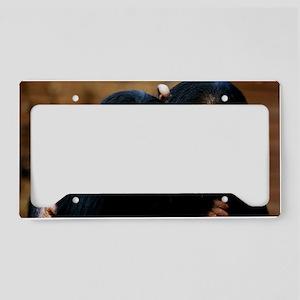 Chimpanzees License Plate Holder