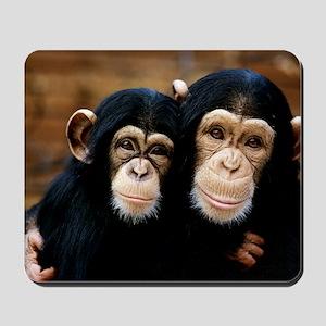 Chimpanzees Mousepad