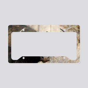 Cape buffalo and yellow-bille License Plate Holder