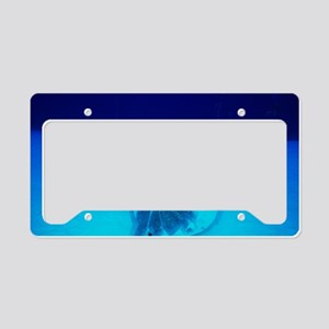 Columbus plaque License Plate Holder