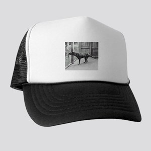 Tasmanian Wolf Hat