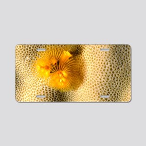 Christmas tree worm Aluminum License Plate