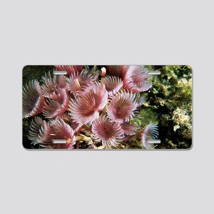 Cluster duster fan worm Aluminum License Plate