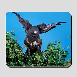 Common buzzard Mousepad