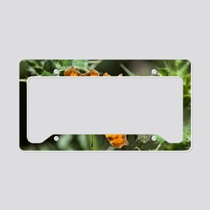 Comma butterfly (Polygonia c- License Plate Holder