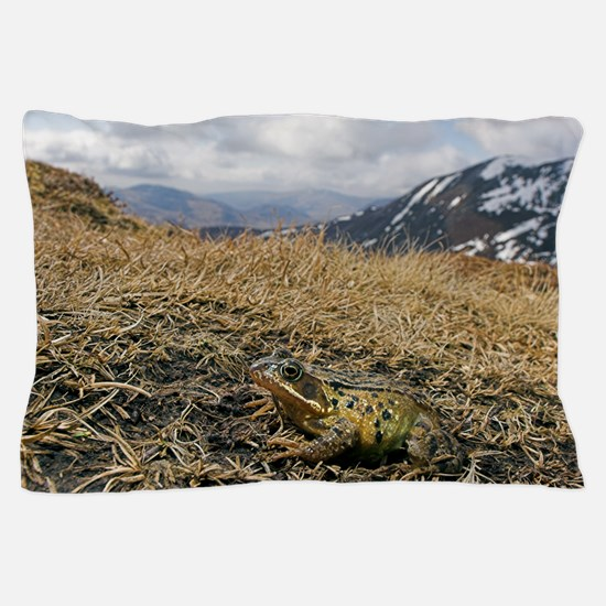 Common frog migrating Pillow Case