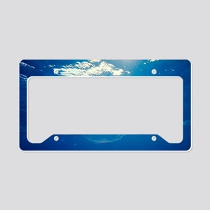 Common jellyfish License Plate Holder