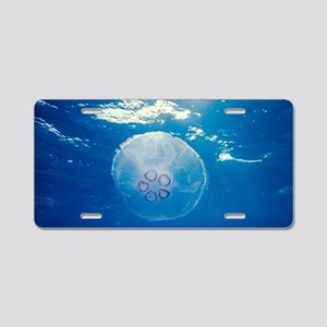 Common jellyfish Aluminum License Plate