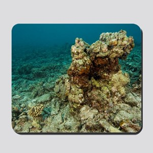 Coral reef devastation Mousepad