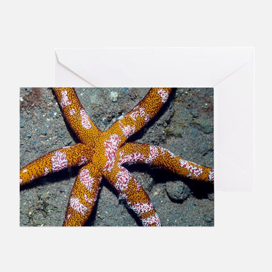 Comb jelly feeding on a starfish Greeting Card