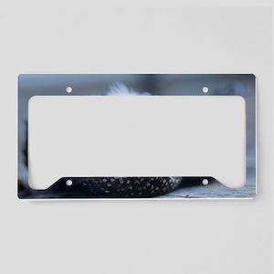 Dead kestrel License Plate Holder