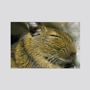 Degu Baby Sleeping Picture Rectangle Magnet
