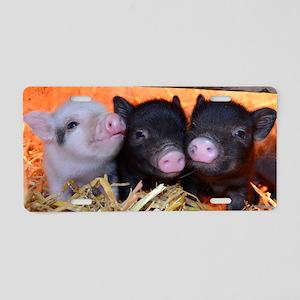 3 Little Pigs Aluminum License Plate