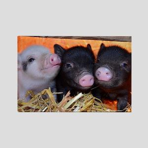 3 Little Pigs Rectangle Magnet