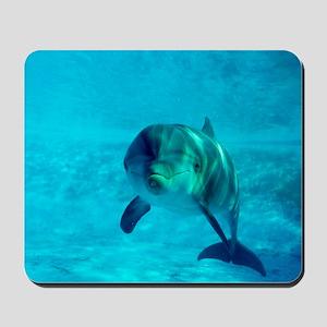 Dolphin in captivity Mousepad