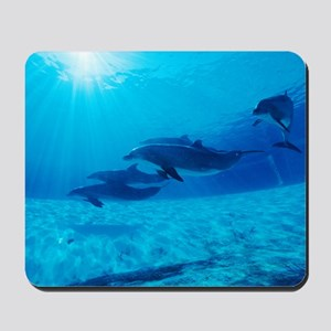 Dolphins in captivity Mousepad