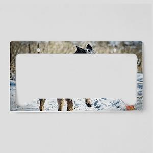 Cattle Dog Calendar 2013 License Plate Holder