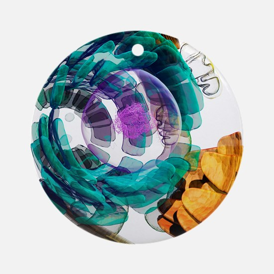 Animal cell, artwork Round Ornament