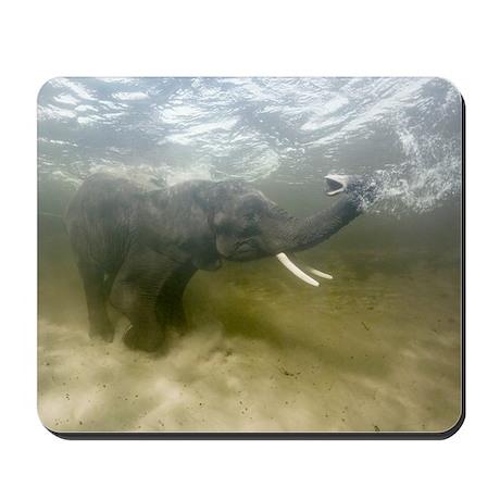 African elephant swimming Mousepad