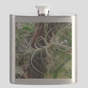 Epiphytic bromeliad Flask