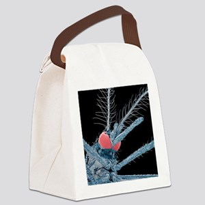 Asian tiger mosquito, SEM Canvas Lunch Bag