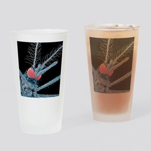 Asian tiger mosquito, SEM Drinking Glass