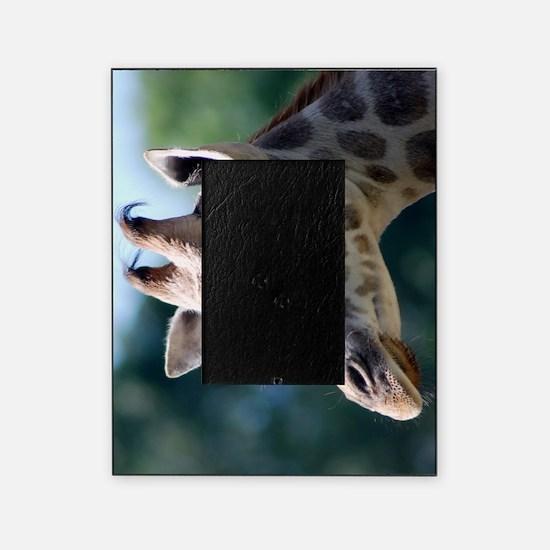 Rothschild Giraffe Slider Case Picture Frame