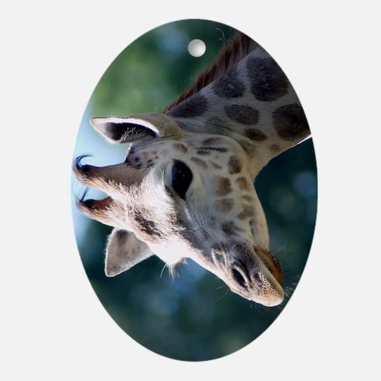 Young Rothschild Giraffe Folio Cover Oval Ornament