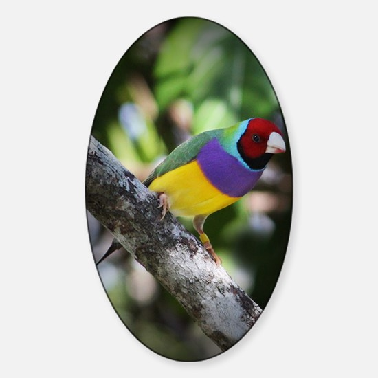 Lady Gouldian Finch Sticker (Oval)