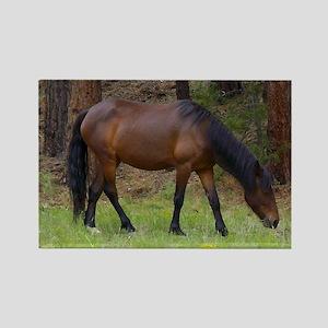 Wild Horse Rectangle Magnet