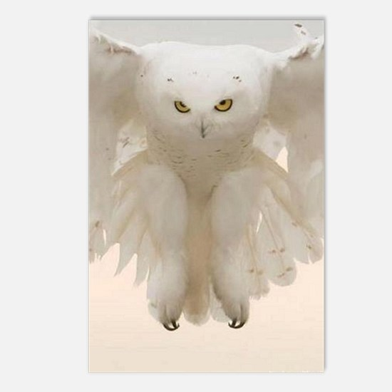 Ghost Owl Postcards (Package of 8)