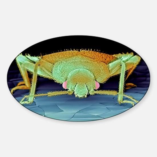 Bed bug, SEM Sticker (Oval)