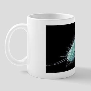 Beetle larva, SEM Mug