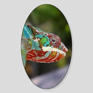Chameleon Looking Sticker (Oval)