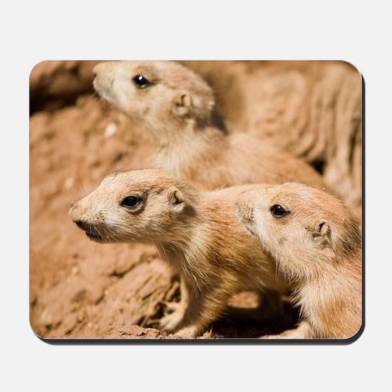 Black-tailed prairie dogs Mousepad