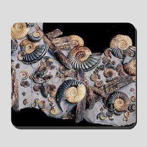 Ammonites Mousepad