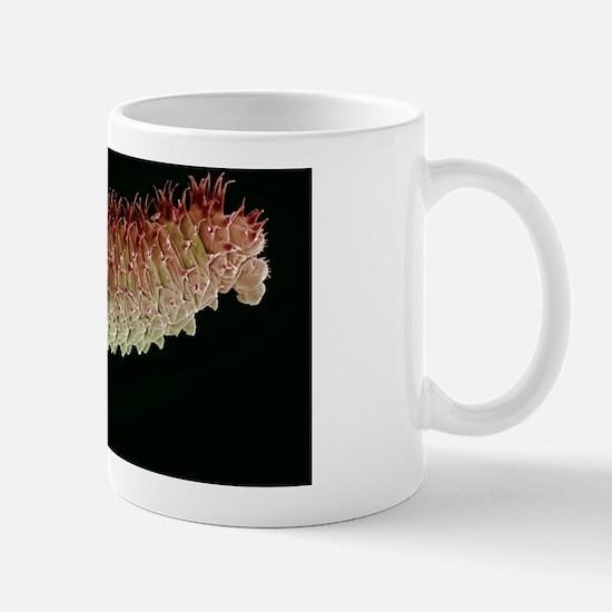 Caterpillar, SEM Mug