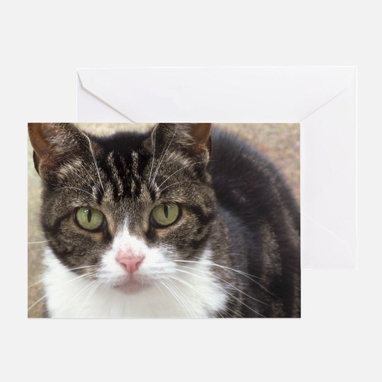 Tabby Cat Stare with Green Eyes Greeting Card