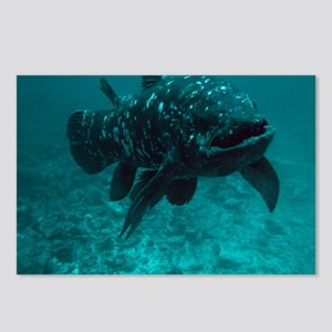 Coelacanth fish Postcards (Package of 8)