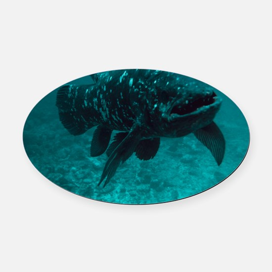 Coelacanth fish Oval Car Magnet