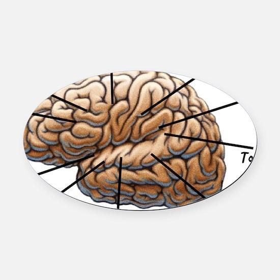 Atlas of a Plumbers Brain Oval Car Magnet
