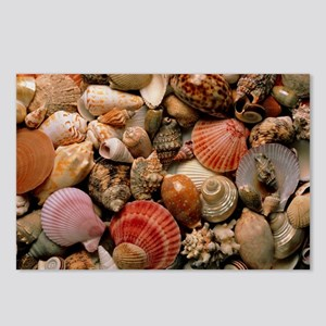 Collection of sea shells Postcards (Package of 8)