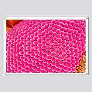 Compound eye of a mosquito, SEM Banner