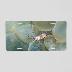 Coral shrimp Aluminum License Plate